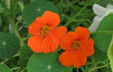 Garden Of Garnish: Edible Flowers To Sow This Spring