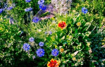 How To Protect Your Garden During Summer's Hot Heat