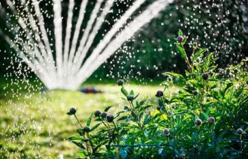 How To Conserve Water In Your Sustainable Home Garden
