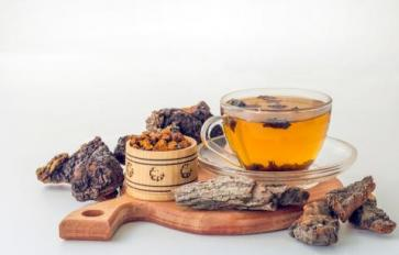 Chaga Mushrooms: Black Gold For Your Health